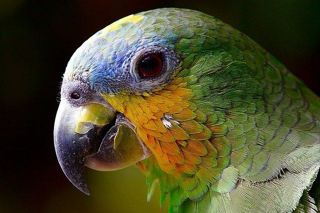 zabawki dla papug